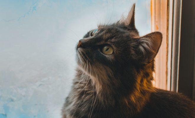 Comment nettoyer du pipi de chat sur un canap mes - Nettoyer canape tissu bicarbonate de soude ...